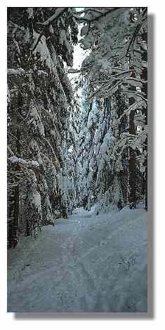 [Foto:wintergasse.jpg]